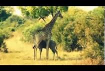 BBC Animal odd Couples